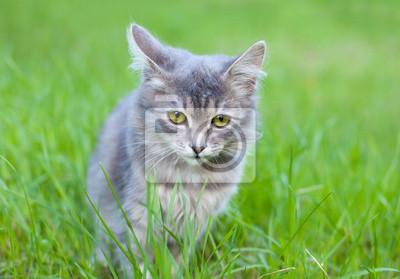 Uroczy kotek siedzi w trawie