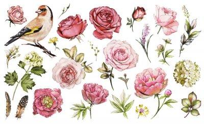 Naklejka Ustaw elementy akwarela kwiat róży, piwonie, hortensja, ogród kolekcji i dzikich kwiatów, liści, gałęzi, ilustracja wyizolowanych na białym tle, ptak - goldfinch, różowy pączek