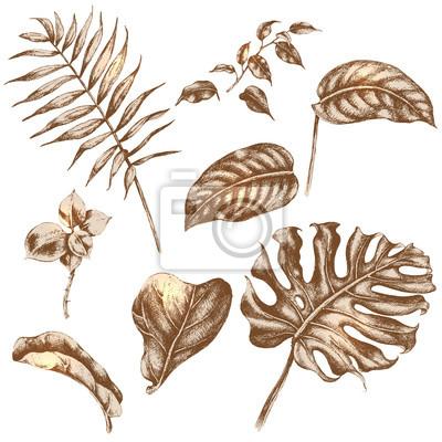 Ustaw tropikalnych liści roślin.