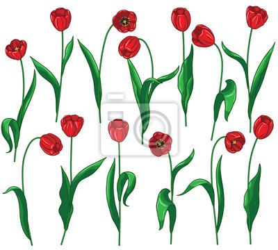 Ustawić czerwone tulipany