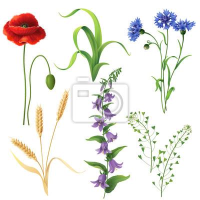 Ustawić kwiaty