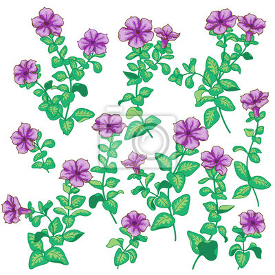 Ustawić kwiaty petunii
