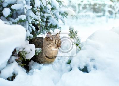 Usytuowanie Kot w śniegu