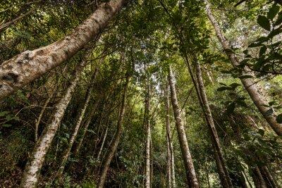 Naklejka Valdivian temperate rain forest