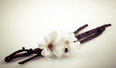 Naklejka Vanilla Bean A Flower