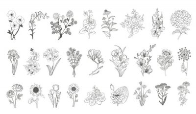 Naklejka Vector set flowers illustration. 28 elements with botanical flowers outline with leaves in black isolated on white background. Ornate contour Anthurium flowers for summer design or coloring book.