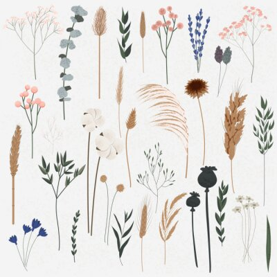 Naklejka Vector set of boho plants. Beautiful hand drawn wild grass and flowers. Collection of floral elements: pampas grass, poppy heads, lavander, cotton and other. Stylish flat elements for your design