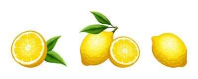 Naklejka Vector set of citrus lemon fruit isolated on a white background.