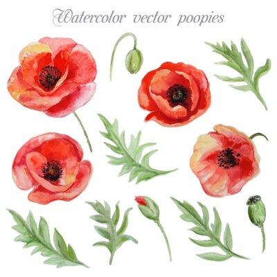 Naklejka Vector set of red watercolor poppy flowers.