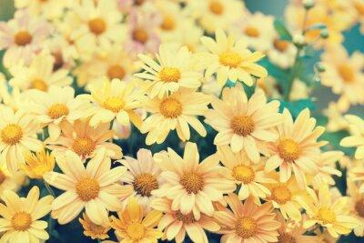 Naklejka Vintage dzikie kwiaty rumianku