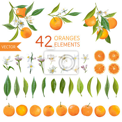 Naklejka Vintage Pomarańcze, kwiatów i liści. Lemon Bouquetes. Akwarela Style