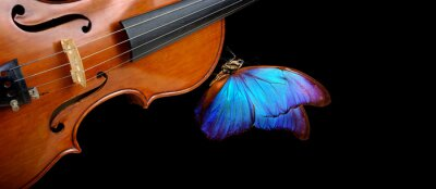 Naklejka violin isolated on black closeup. beautiful blue butterfly morpho on violin. music concept. copy spaces