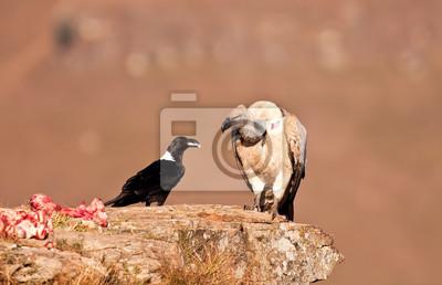 Vulture zielonego i biały kruk szyjką