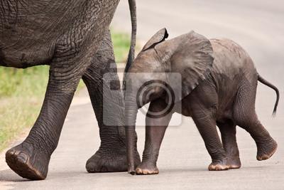 Walking słoń dziecko oprócz matki