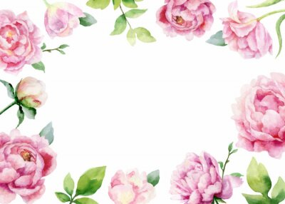 Naklejka Watercolor vector hand painting card of peony flowers and green leaves.