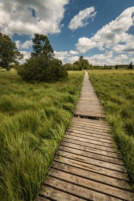 Naklejka Wege und in der Hohen Pfade Venn