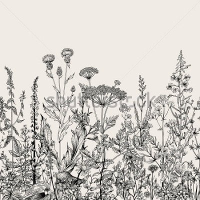 Naklejka Wektor bez kwiecistej granicy. Zioła i dzikie kwiaty. Styl grawerowania ilustracji botanicznych. Czarny i biały