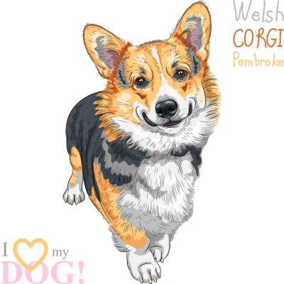 Naklejka wektor szkic Pembroke Welsh corgi psa uśmiechem