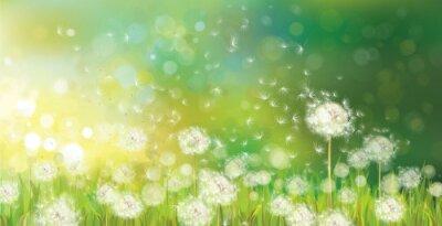 Naklejka Wektor wiosny tła z białym mlecze.