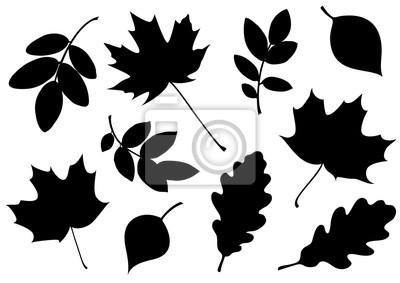 Naklejka Wektorowy ustawiający dekoracyjne jesień liścia sylwetki.