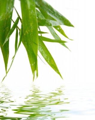 Naklejka Wet bambusa na białym tle