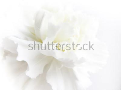 Naklejka White flowers background. Macro of white petals texture. Soft dreamy image