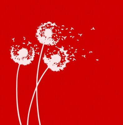 Naklejka WHITE mlecze na czerwonym backgrouind