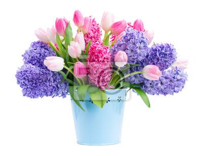 Naklejka Wiązka hiacyntowi błękitni i różowi świezi kwiaty w błękitnym garnku odizolowywającym na białym tle