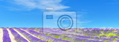 Widok lawendowy pole