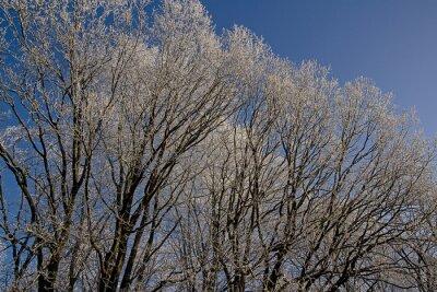 Wierzchołek Frost