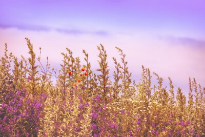 Wild flowers. Blossoming wildflowers. Beautiful nature background. Summertime