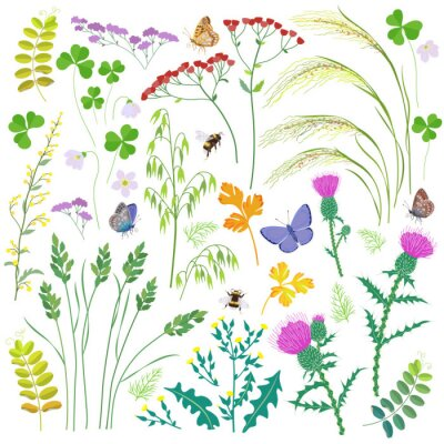Wild Herbs, Wildflowers, Cereals and Insects  Set