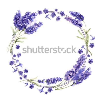 Naklejka Wildflower Wieniec kwiatów lawendy w stylu przypominającym akwarele na białym tle. Pełna nazwa rośliny: lawenda. Aquarelle dziki kwiat na tle, tekstury, wzór otoki, ramki lub obramowania.