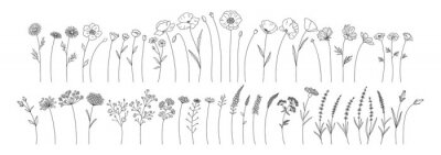 Naklejka Wildflowers set, line style hand drawn flowers. Meadow herbs, wild plants, botanical elements for design projects. Vector illustration.
