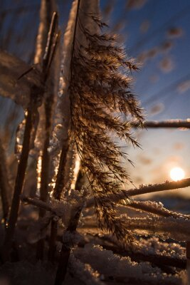 winterlandschaft Schilf