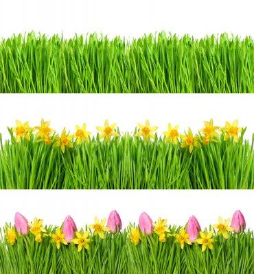Naklejka Wiosenne kwiaty narcyzów tulipana. Zielona trawa krople wody