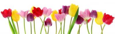 Naklejka Wiosenne kwiaty tulipanów z rzędu