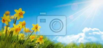Naklejka Wiosenny kwiat