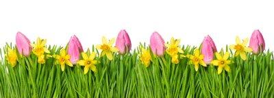 Naklejka Wiosna narcyz tulipan zielona trawa krople wody
