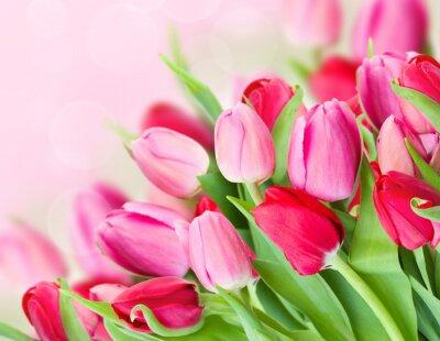 Naklejka wiosną różowe tulipany bukiet