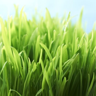 Naklejka Wiosna trawy