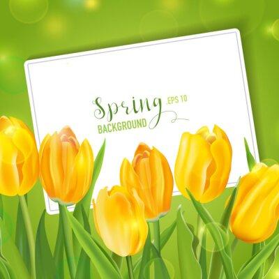 Naklejka Wiosna tulipany kwiat tle - z karty do tekstu