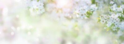 Naklejka Wiosna z kwiatami wiśni