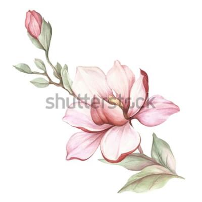 Naklejka Wizerunek kwitnąca magnolii gałąź. Akwarela ilustracja