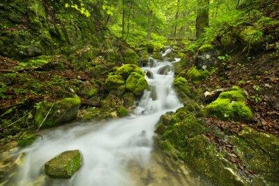 Naklejka Wodospad w bujnym wąwóz w Słowackim Raju, na Słowacji
