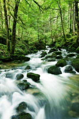 Naklejka Wodospad w lesie
