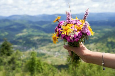 Naklejka Woman hand holding a colorful bouquet of wild flowers on the mountain top with mountains landscape on background