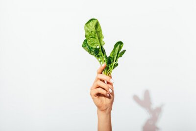 Naklejka Woman's hand with manicure holding green bunch of spinach