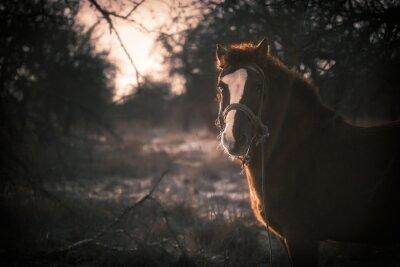 Naklejka wypas koni w ogrodzie zimowym