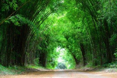 Naklejka Wysoki bambus pokrycie drogi gliny